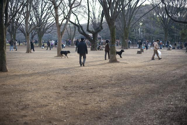 JAPANBOX | Dog-friendly areas in Yoyogi Park